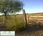 PROPIEDAD RURAL VENTA<br>Zona: Chamical<br>Barrio: Chamical<br>Direccion: Chamical<br>(CUP: 811)